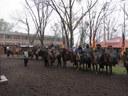 Cavalarianos